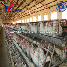 Best-selling Anping Factory A3-120 Poultry chicken cage/poultry battery cage equipment/design poultry farm layer battery cages