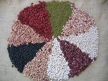 White Kidney Beans (Long Shape& Round)