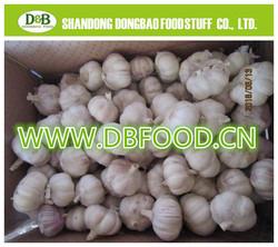2015 Fresh garlic low price high quality