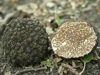 tartufi, truffel, truffle, truffe