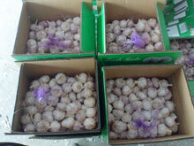 Reliable Price Top Quality Red Garlic For Dubai