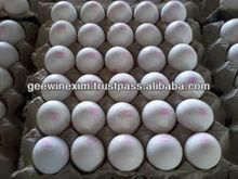 blanco fresco de huevos con cáscara