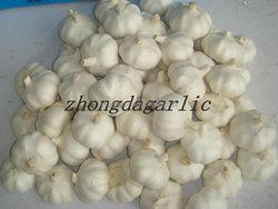 "New crop Fresh"" A Grade"" White Garlic From India"