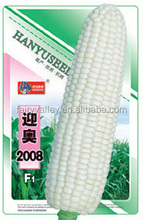Hybrid White Sweet Waxy Glutinous Corn Seeds Maize Seeds For Planting-Ying Ao 2008 F1