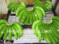 Premium fresh cavendish banana