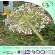 Pure Carrot seed Oil natural plant extract