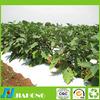 High Quality Polypropylene Spunbond Nonwoven farm fabric for ground cover