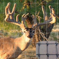 fixed knot galvanized steel deer fence