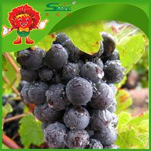 Fresh Yunnan Native Fruits Sweet Purple Grapes