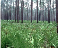 GMP certificated manufacturer supply hot sale organic high purity Saw Palmetto extract powder