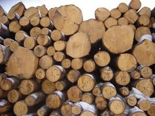 Beech wood