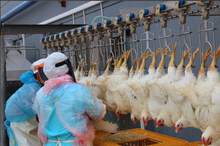 halal poultry slaughter equipment/meat processing machinery