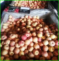 China New Crop Ripe Juicy Fresh Fuji Apples:60 mm--70 mm