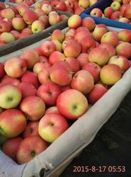 2015 fresh gala apple seller,New corp fresh gala apple price