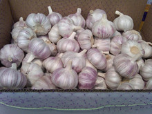 Normal Sizes Fresh Red Natural Wholesale Garlic Price