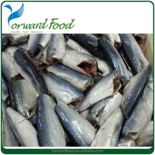 2015 new season Scomber Japonicus fish frozen mackerel fish prices