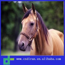 injectable vitamins b complex for horses