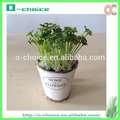 Plantas Artificial Decorativo Bonsai Wholesale, Artificial Brote de soja
