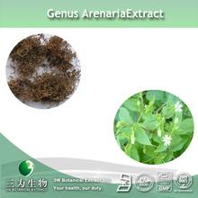 Centipeda minima Plant Extract 10:1 in 3W Manufacturer