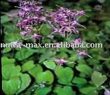 Honey Goat Weed Extract 50% Icariins, Specializing in Botanical Extracts (simon@nutra-max.com)