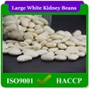 40pcs-110pc/100g Best Selling Products Large White Kidney Beans Sale,Common Cultivation Type Chinese White Kidney Beans In Stock