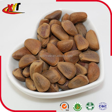 High quality pine nut