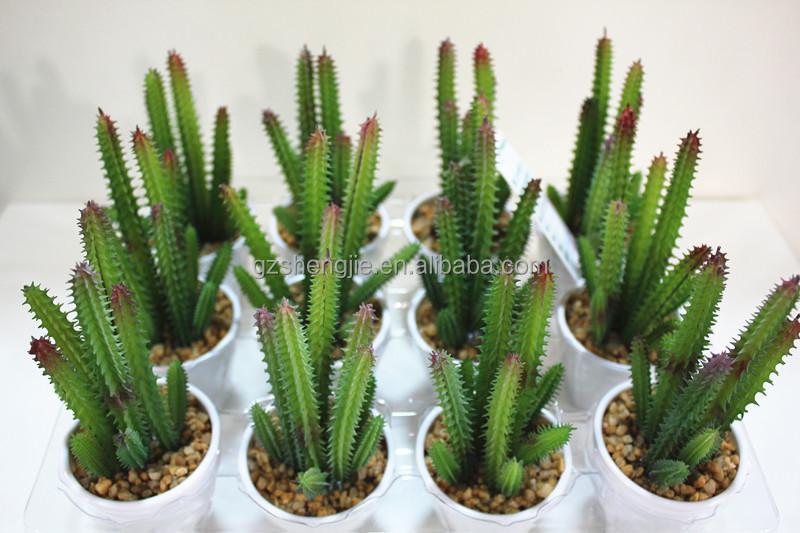 kunstmatige bonsai plant/indoor cactussen/kleine bonsai voor ...