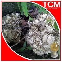 100% Natural Maitake Mushroom Extract Powder/Hen of the Woods Extract