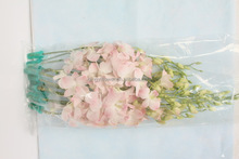 Wide varieties hot selling butterfly orchids