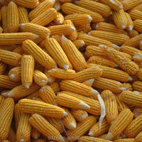 Bulk feed corn for hot sale with new crop in 2015