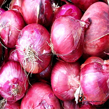 2015 crop fresh red onion with high quality and good price