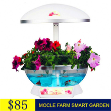 Creative gifts special planting & lighting factory direct