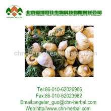 Organic Maca P.E. / Maca Extract specification of 10:1, 4:1 improving Sexual Function 100% natural products