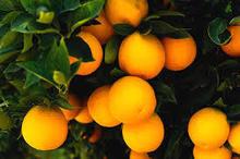 Fruits,Naval orange citrus fruit,apple,Avocado,Banana,Berries,Durian