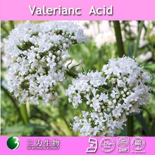high quality 4:1 10:1 valeriana officinalis extract