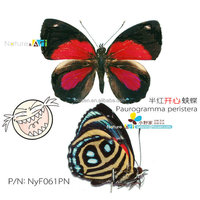 FOUSEN Nature& Art A1 Paurogramma peristera dried triangle paper bag butterfly
