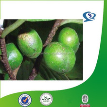 pygeum africanum p.e./ pygeum bark p.e./ pygeum topengii extract