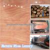 /p-detail/Grado-AB-chapa-de-madera-natural-1300X2500mmX0.30mm-300002076488.html
