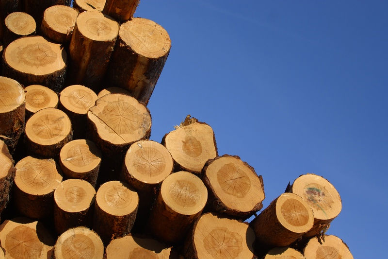 African hardwood logs and sawn timber buy exotic