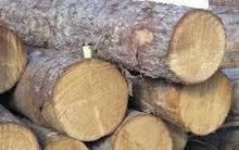 Quality pine Spruce Oak, Beech Birch, Teak, Ash Logs and lumber from Ukraine, Germany and russia