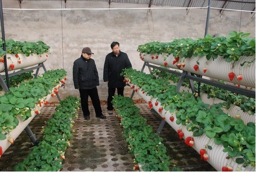 Strawberry soilless agriculture planting medium rock wool for Soil less farming