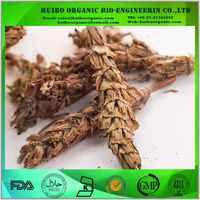 Selfheal extract / spica prunellae / selfheal spike extract