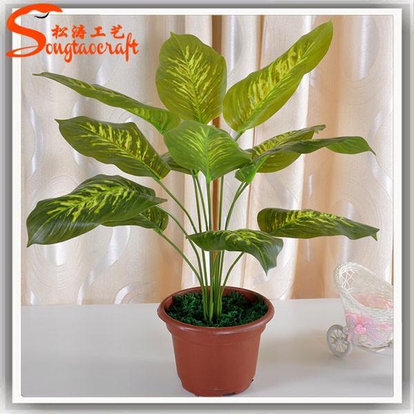 Nombres de plantas macetas de pl stico para las plantas for Plantas decorativas de interior