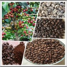 Yunnan arabica variété grain de café, Grains de café vert, Café torréfié haricots