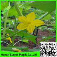 Pakistan vegetable used plastic green extruded cucumber plant support net/bop stretch net made in China