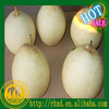 2015 new crop factory manufacturer China Fresh Ya Pears supplier