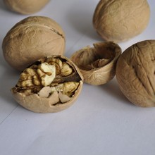 High quality paper shell walnut kernel