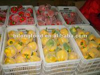 2015 new crop fresh capsicum (china)
