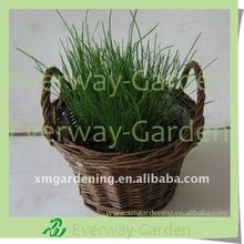 Easter Grass Planting Set