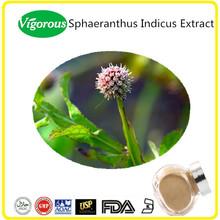 Pure natural Sphaeranthus indicus extract/Sphaeranthus indicus extract powder/Sphaeranthus indicus powder